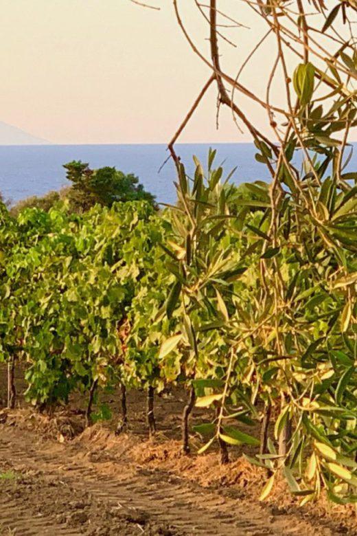 Planeta vineyard, Capo Milazzo